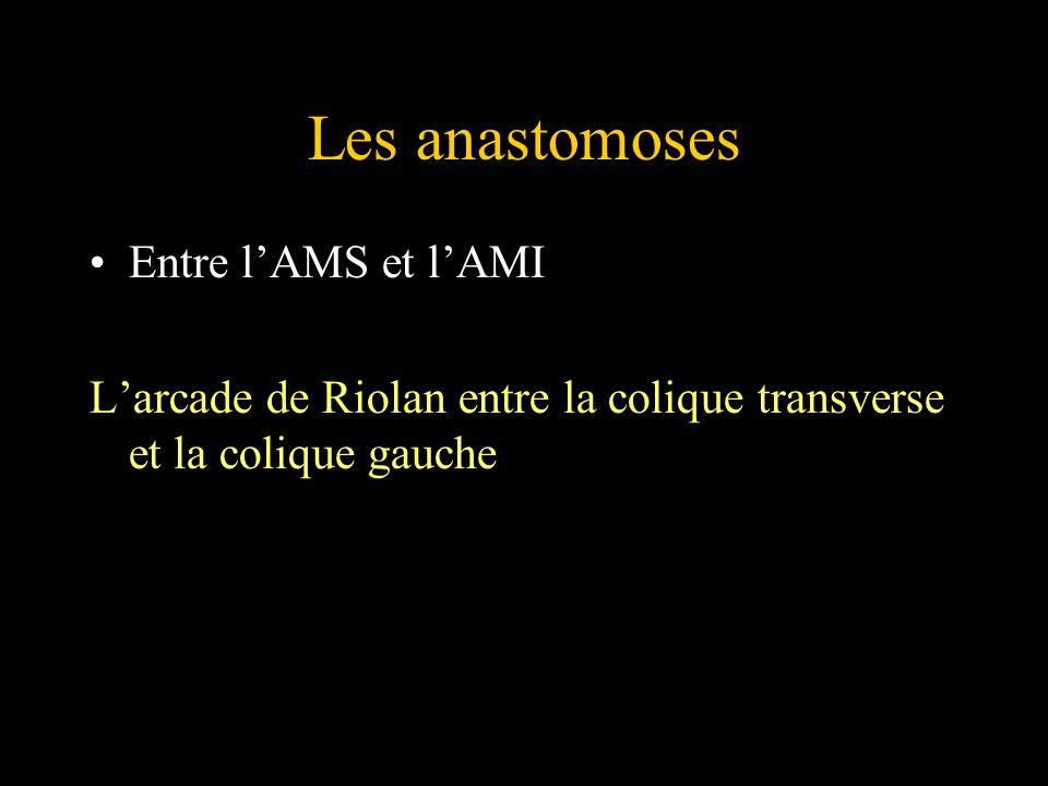 Les anastomoses Entre lAMS et lAMI Larcade de Riolan entre la colique transverse et la colique gauche