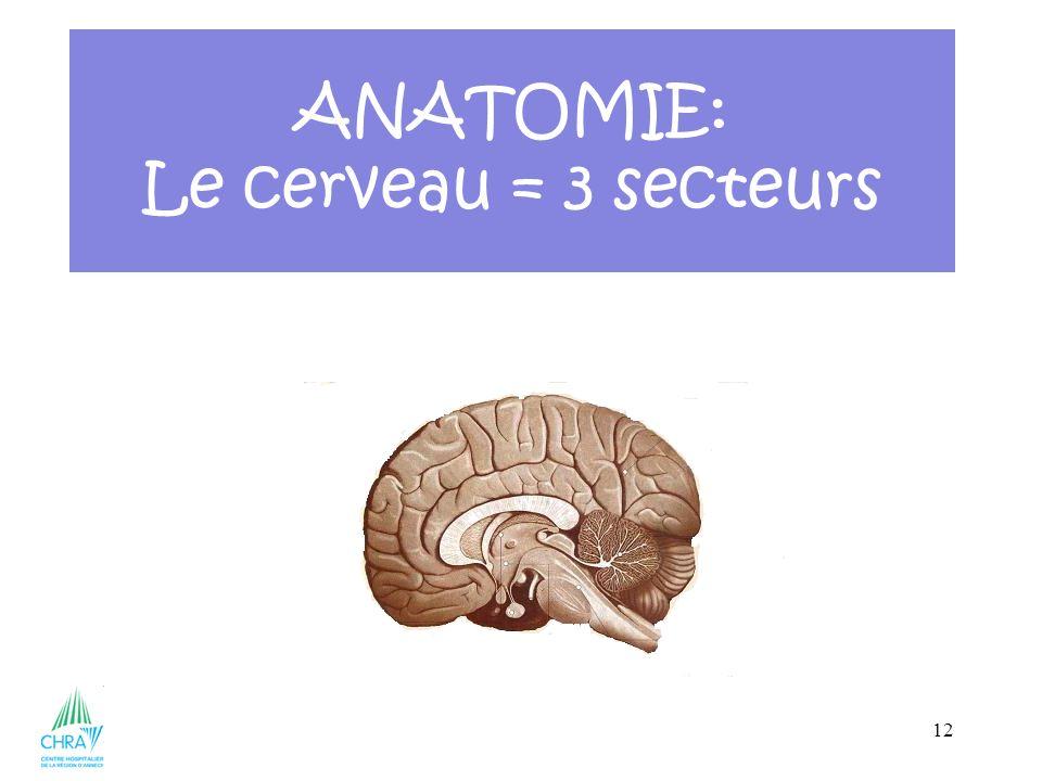 12 ANATOMIE: Le cerveau = 3 secteurs