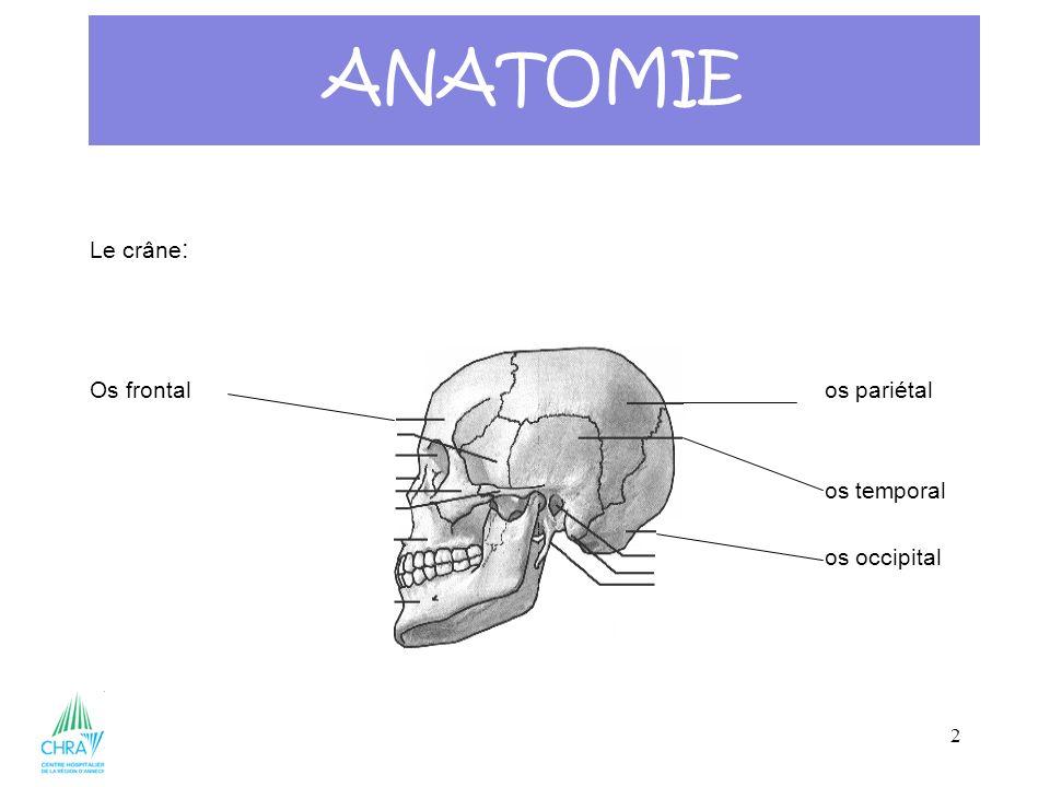 3 Le crâne: ANATOMIE
