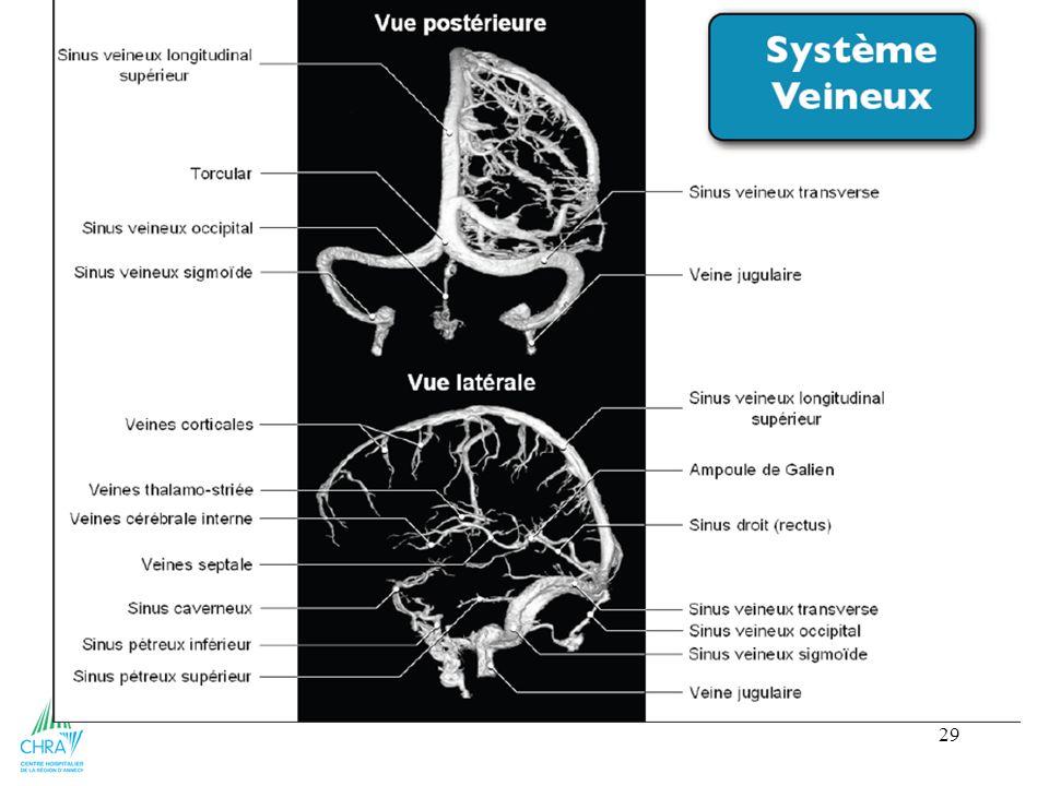 29 sinus longitudinal supérieur (médian) sinus longitudinal inférieur (médian) sinus droit = relie les deux précédents sinus sigmoïde chaque côté sinu