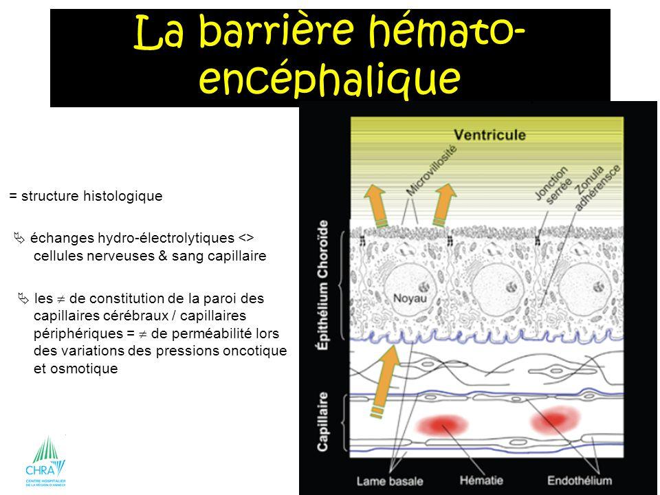 33 = structure histologique échanges hydro-électrolytiques <> cellules nerveuses & sang capillaire les de constitution de la paroi des capillaires cér