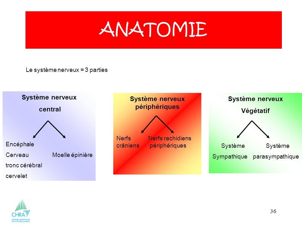 36 ANATOMIE Le système nerveux = 3 parties Système nerveux central Encéphale Cerveau Moelle épinière tronc cérébral cervelet Système nerveux périphéri