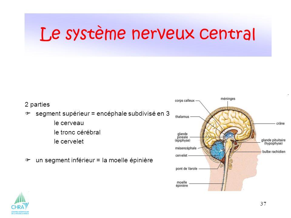 37 2 parties segment supérieur = encéphale subdivisé en 3 le cerveau le tronc cérébral le cervelet un segment inférieur = la moelle épinière Le systèm