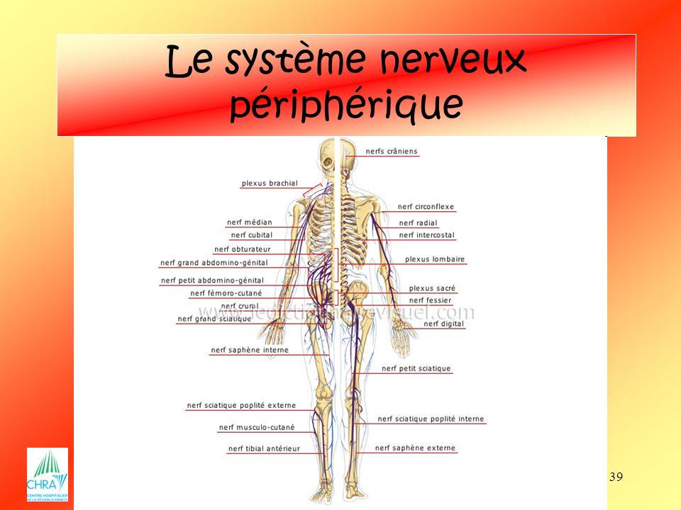 39 Le système nerveux périphérique