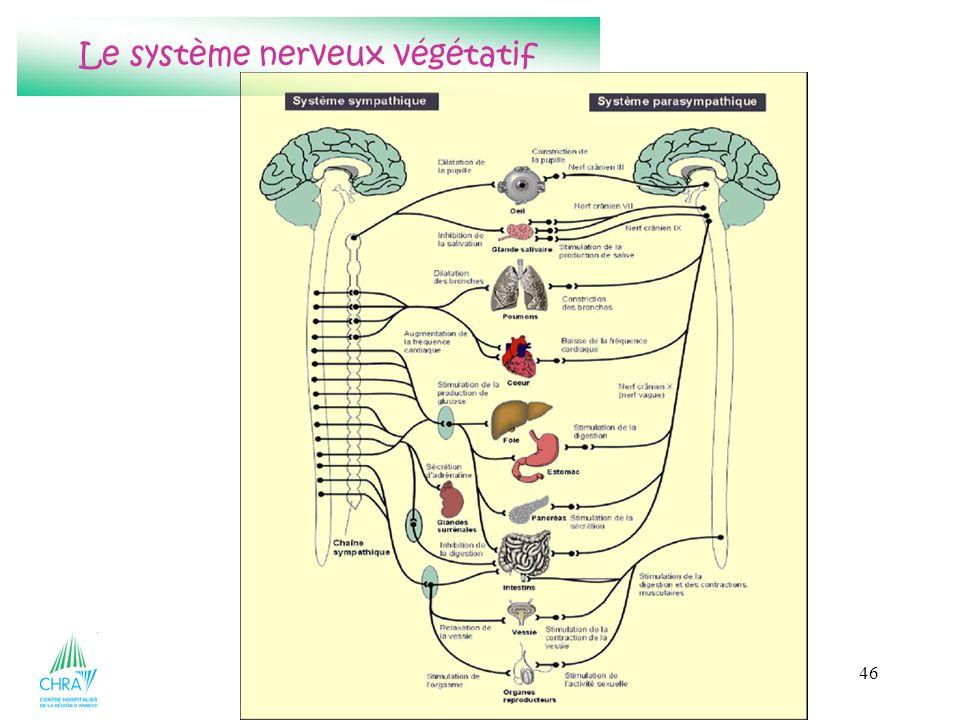 46 Le système nerveux végétatif