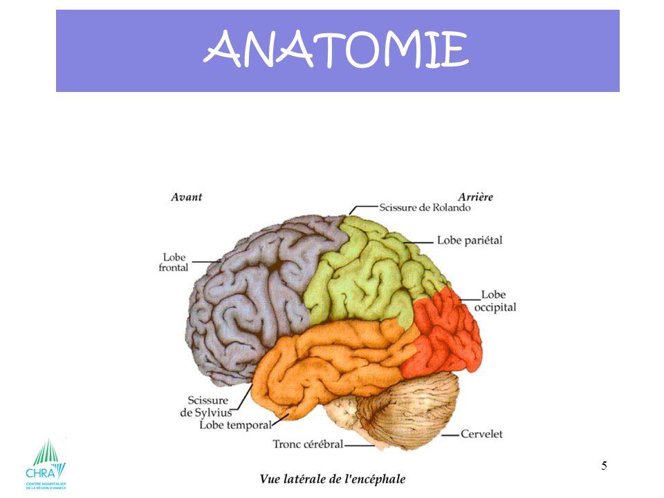 36 ANATOMIE Le système nerveux = 3 parties Système nerveux central Encéphale Cerveau Moelle épinière tronc cérébral cervelet Système nerveux périphériques Nerfs Nerfs rachidiens crâniens périphériques Système nerveux Végétatif Système Sympathique parasympathique