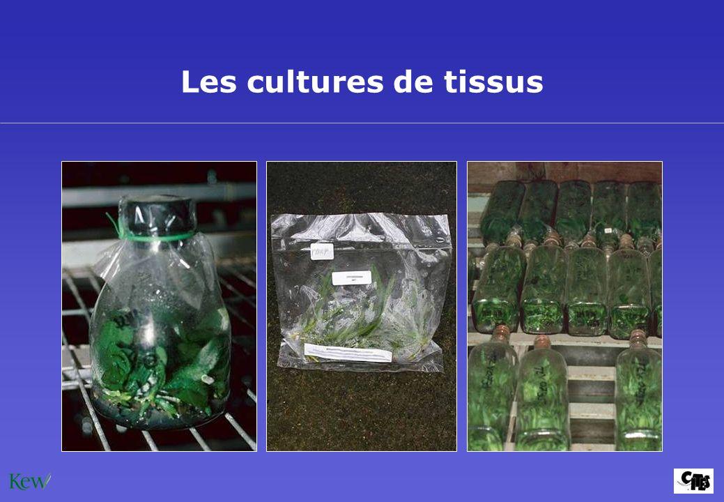 Les cultures de tissus