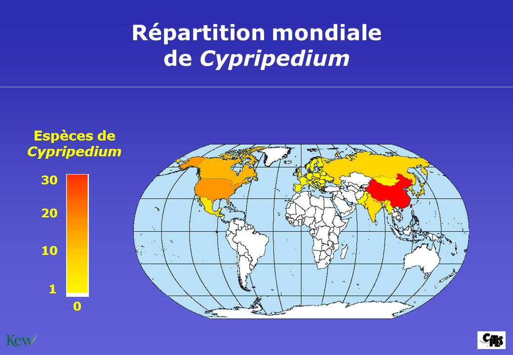 Répartition mondiale de Cypripedium Espèces de Cypripedium 30 1 20 10 0