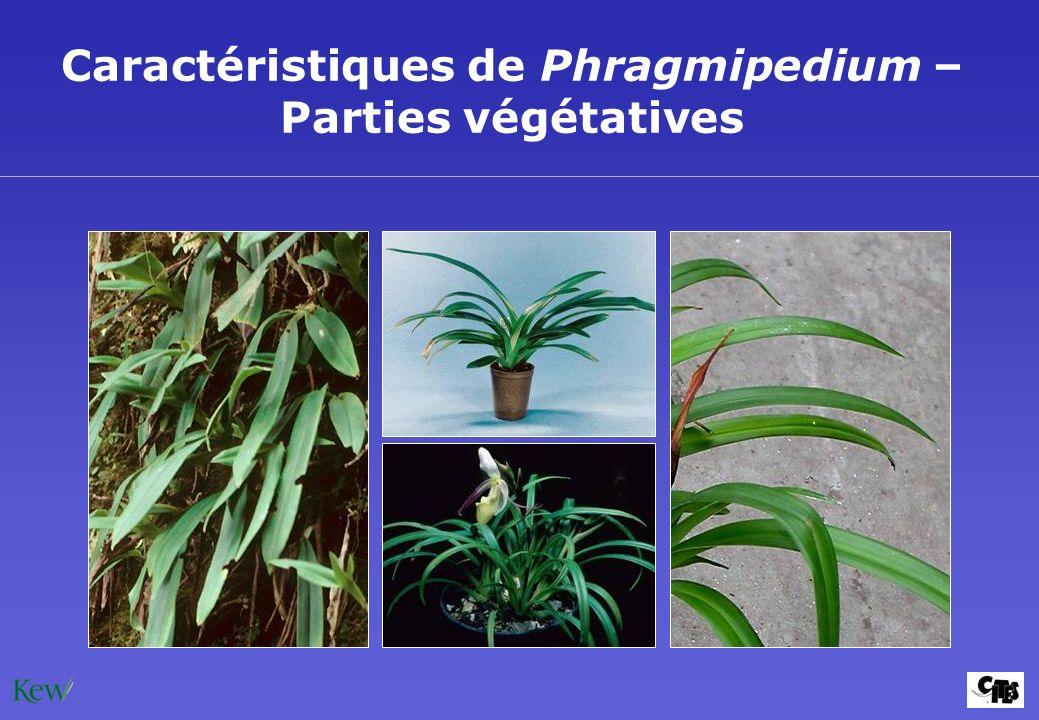 Caractéristiques de Phragmipedium – Parties végétatives