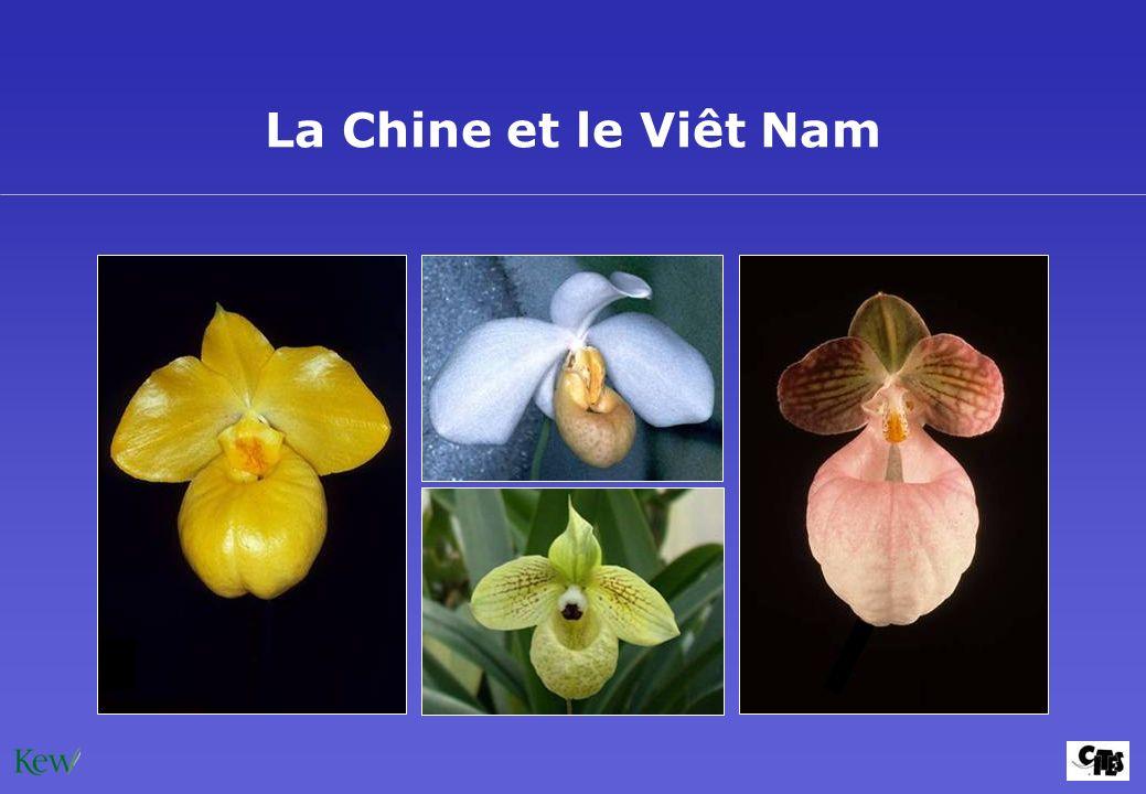 La Chine et le Viêt Nam