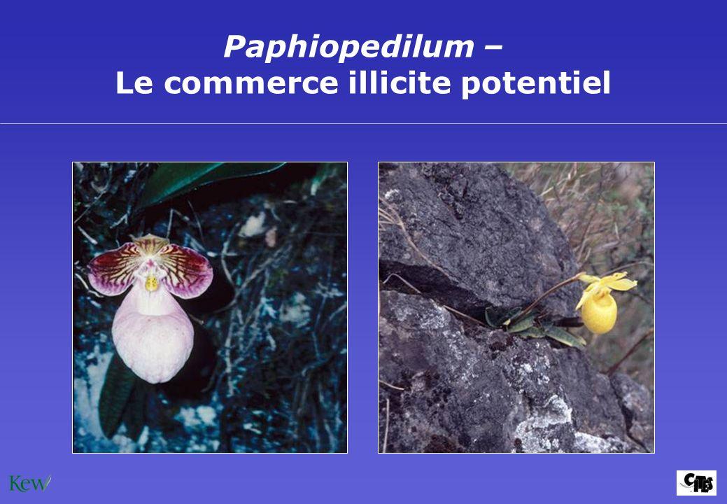 Paphiopedilum – Le commerce illicite potentiel