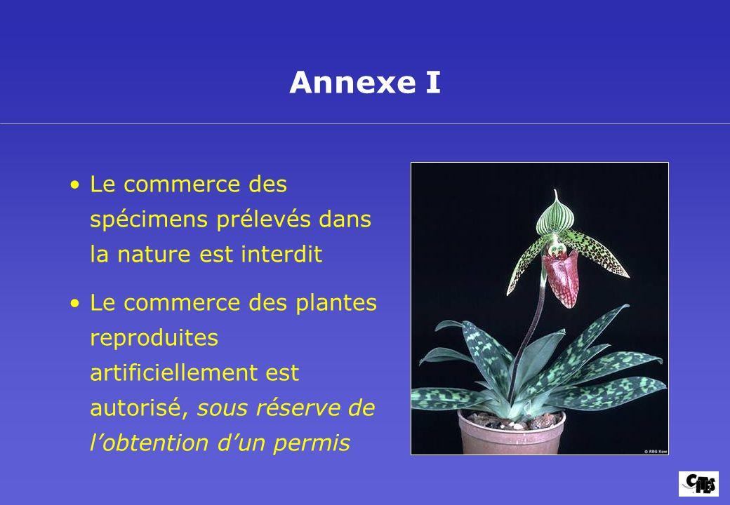 Le commerce des spécimens prélevés dans la nature est interdit Le commerce des plantes reproduites artificiellement est autorisé, sous réserve de lobt