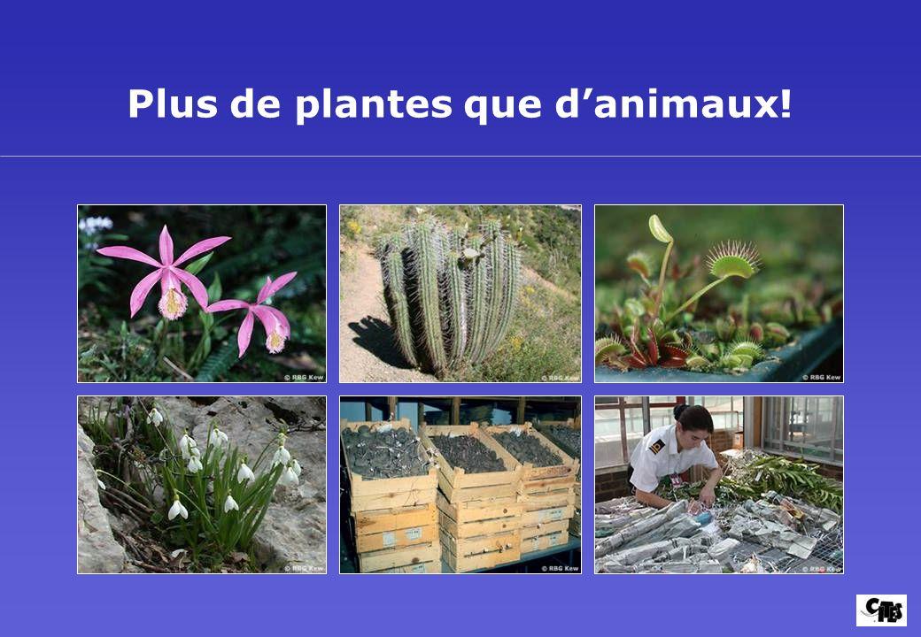 Plus de plantes que danimaux!