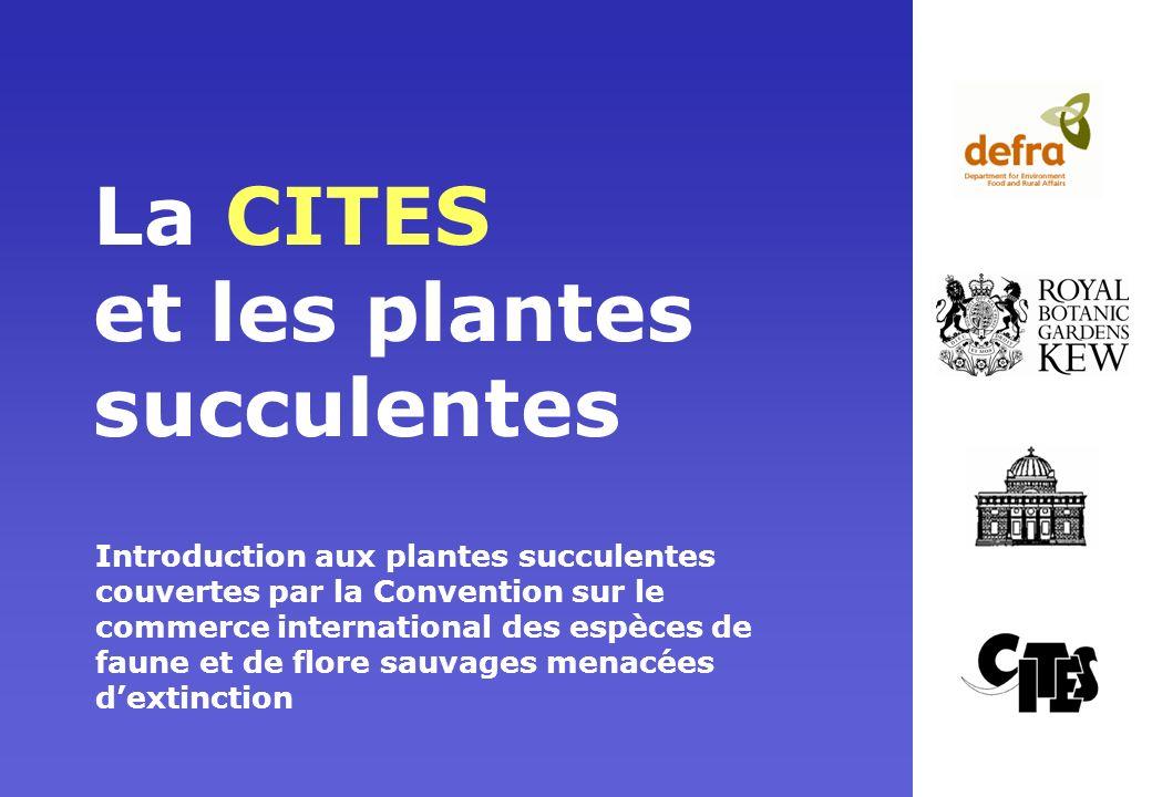 La CITES et les plantes succulentes Introduction aux plantes succulentes couvertes par la Convention sur le commerce international des espèces de faun