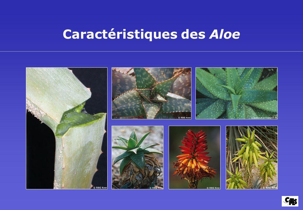 Caractéristiques des Aloe