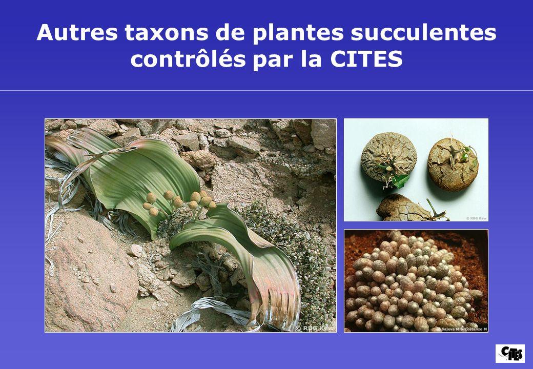Autres taxons de plantes succulentes contrôlés par la CITES