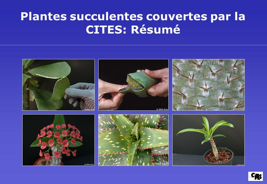 Plantes succulentes couvertes par la CITES: Résumé