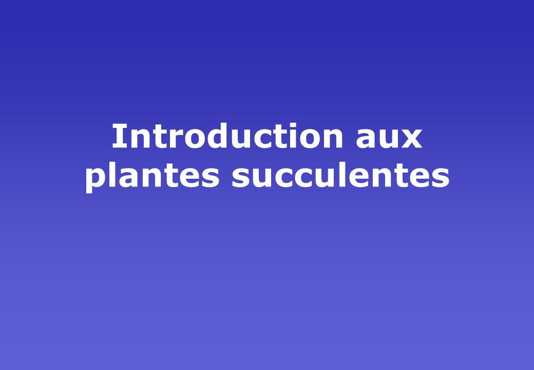 Introduction aux plantes succulentes