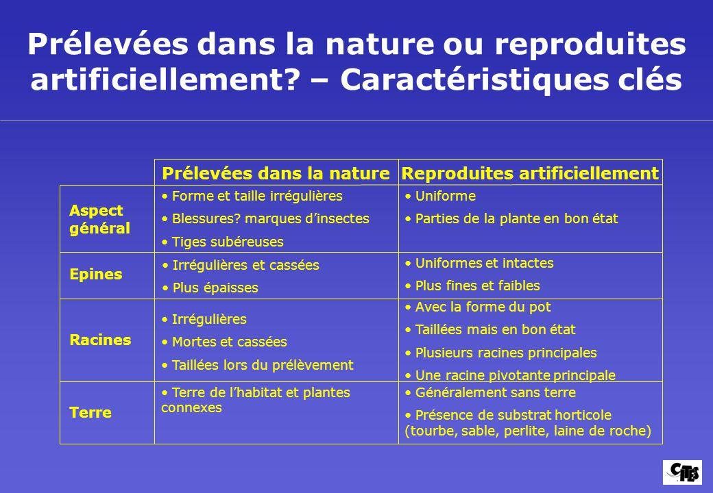 Prélevées dans la nature ou reproduites artificiellement? – Caractéristiques clés Aspect général Epines Racines Terre Prélevées dans la nature Reprodu