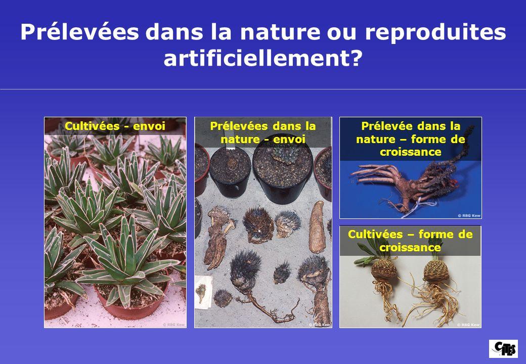 Prélevées dans la nature ou reproduites artificiellement? Cultivées - envoi Cultivées – forme de croissance Prélevées dans la nature - envoi Prélevée