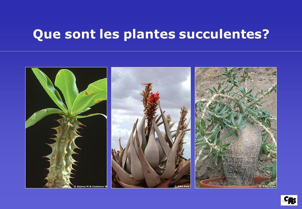 Que sont les plantes succulentes?
