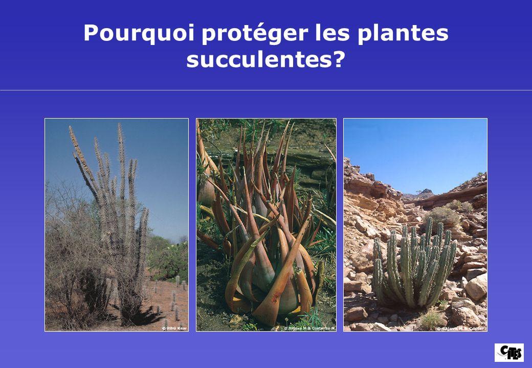 Pourquoi protéger les plantes succulentes?