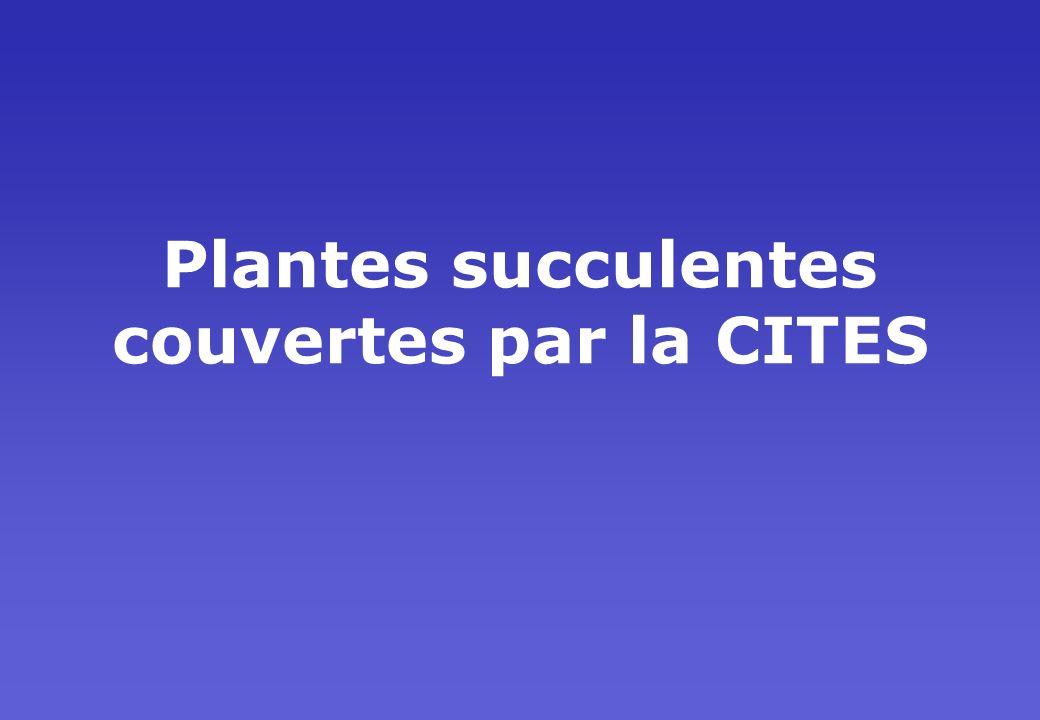 Plantes succulentes couvertes par la CITES