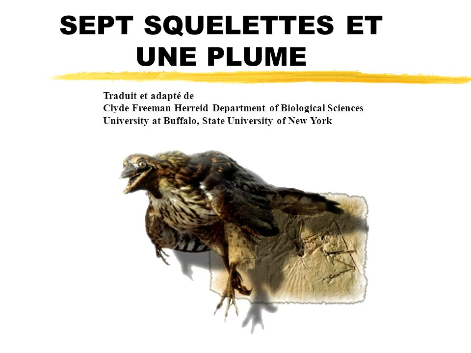 SEPT SQUELETTES ET UNE PLUME Traduit et adapté de Clyde Freeman Herreid Department of Biological Sciences University at Buffalo, State University of New York