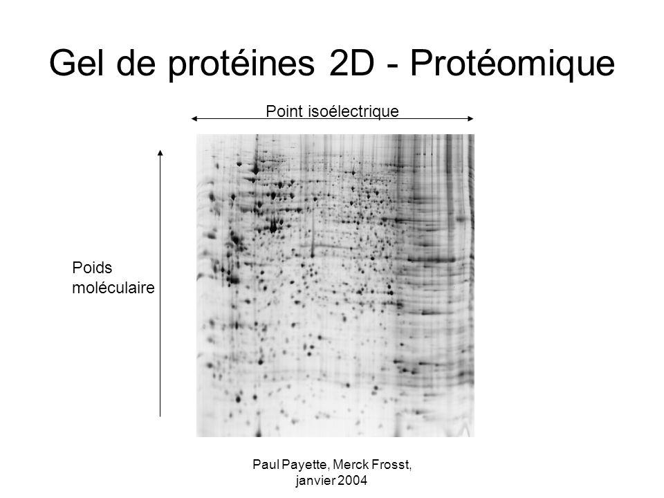 Paul Payette, Merck Frosst, janvier 2004 Gel de protéines 2D - Protéomique Poids moléculaire Point isoélectrique