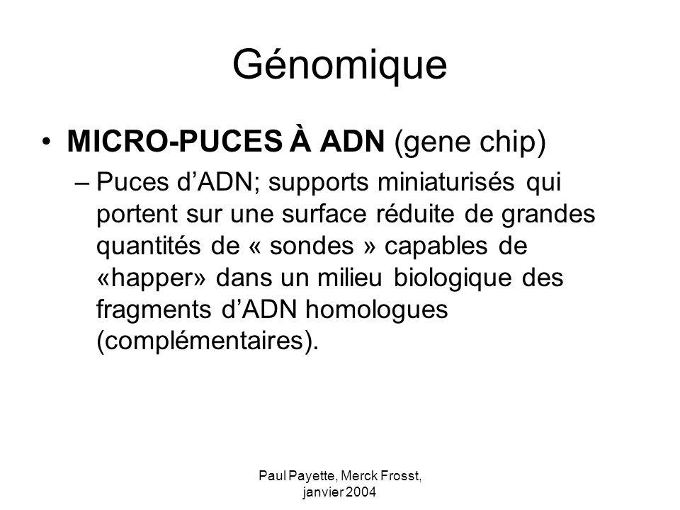 Paul Payette, Merck Frosst, janvier 2004 Génomique MICRO-PUCES À ADN (gene chip) –Puces dADN; supports miniaturisés qui portent sur une surface réduite de grandes quantités de « sondes » capables de «happer» dans un milieu biologique des fragments dADN homologues (complémentaires).