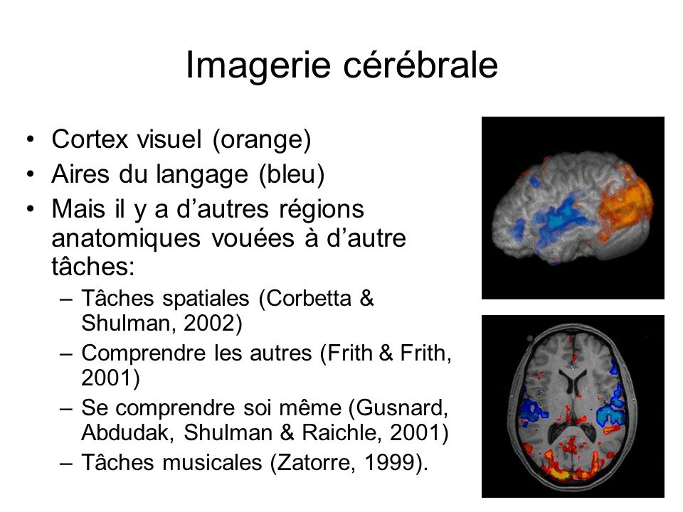 Imagerie cérébrale Cortex visuel (orange) Aires du langage (bleu) Mais il y a dautres régions anatomiques vouées à dautre tâches: –Tâches spatiales (C
