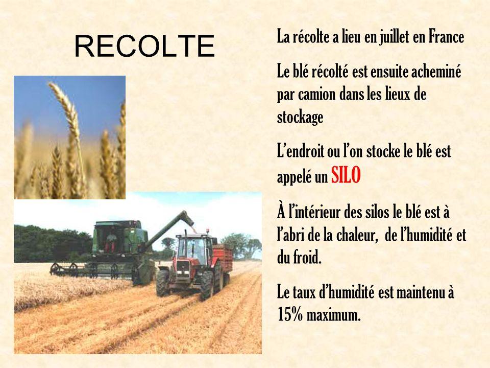 RECOLTE La récolte a lieu en juillet en France Le blé récolté est ensuite acheminé par camion dans les lieux de stockage Lendroit ou lon stocke le blé est appelé un SILO À lintérieur des silos le blé est à labri de la chaleur, de lhumidité et du froid.