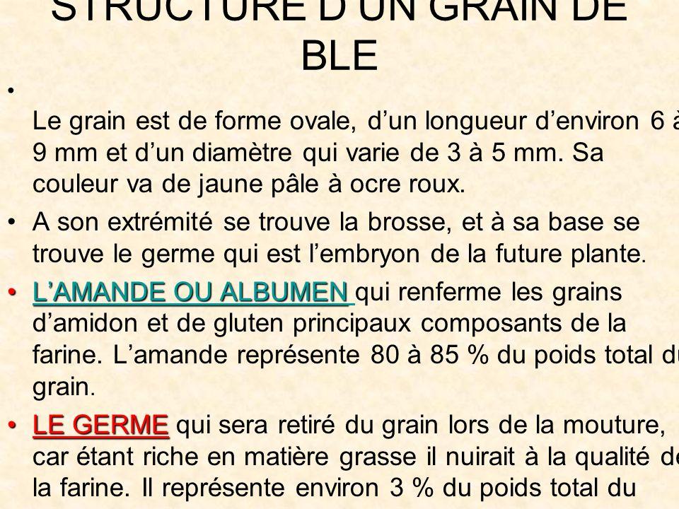 STRUCTURE DUN GRAIN DE BLE Le grain est de forme ovale, dun longueur denviron 6 à 9 mm et dun diamètre qui varie de 3 à 5 mm.