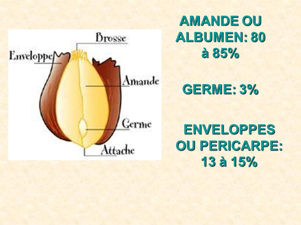 AMANDE OU ALBUMEN: 80 à 85% GERME: 3% ENVELOPPES OU PERICARPE: 13 à 15%