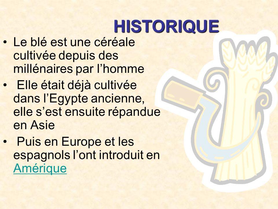 HISTORIQUE Le blé est une céréale cultivée depuis des millénaires par lhomme Elle était déjà cultivée dans lEgypte ancienne, elle sest ensuite répandue en Asie Puis en Europe et les espagnols lont introduit en Amérique Amérique