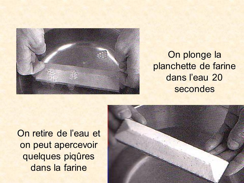 On plonge la planchette de farine dans leau 20 secondes On retire de leau et on peut apercevoir quelques piqûres dans la farine