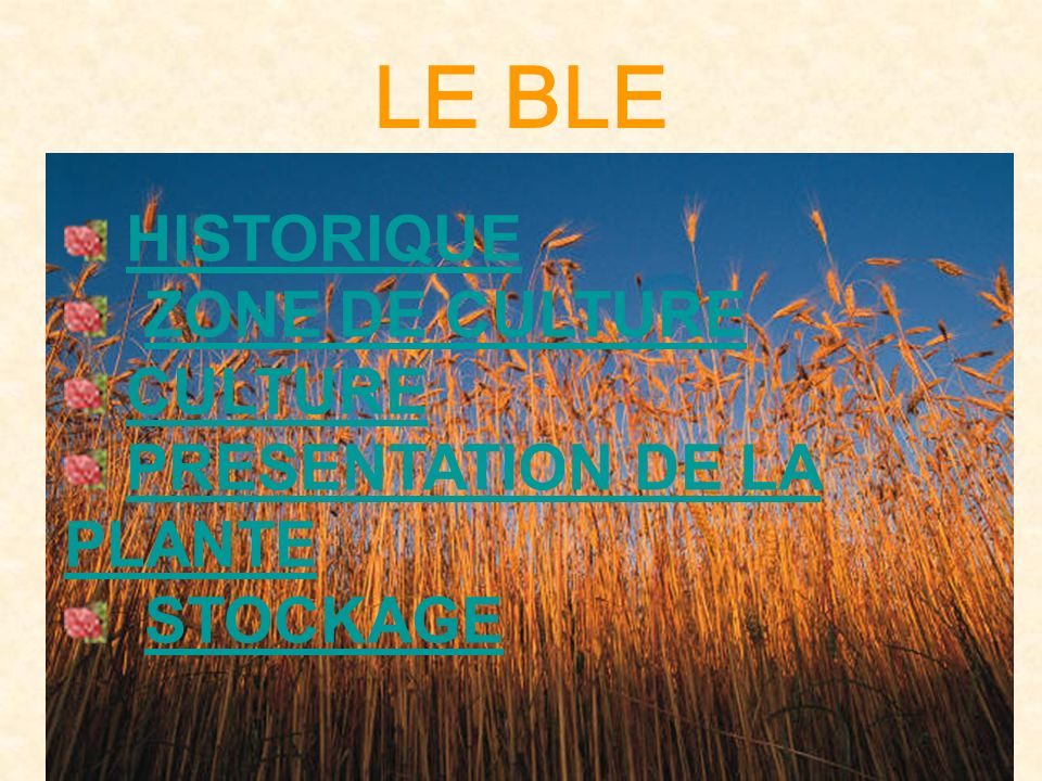 LA MOUTURE DU GRAIN DE BLE PROPRE LE BROYAGELE BROYAGE LE BLUTAGELE BLUTAGELE BLUTAGELE BLUTAGE LE SASSAGELE SASSAGELE SASSAGELE SASSAGE LE CLAQUAGELE CLAQUAGELE CLAQUAGELE CLAQUAGE LE CONVERTISSAGELE CONVERTISSAGELE CONVERTISSAGELE CONVERTISSAGE LA COMMERCIALISATIONLA COMMERCIALISATIONLA COMMERCIALISATIONLA COMMERCIALISATION