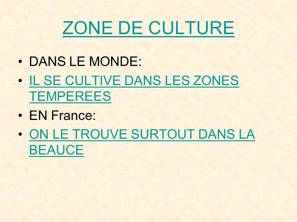 ZONE DE CULTURE DANS LE MONDE: IL SE CULTIVE DANS LES ZONES TEMPEREES EN France: ON LE TROUVE SURTOUT DANS LA BEAUCE