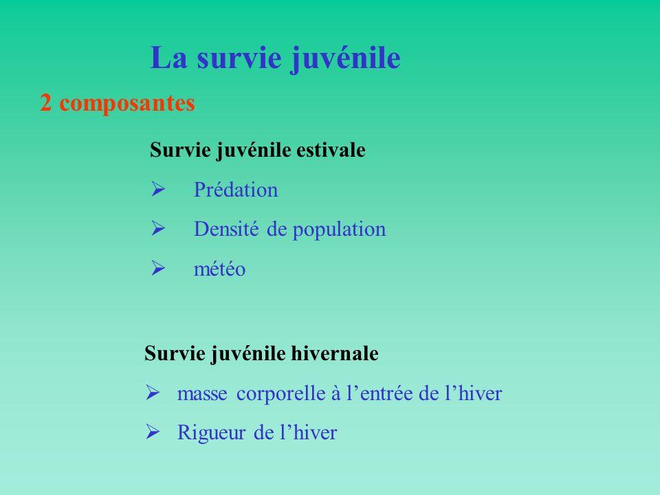 La survie juvénile 2 composantes Survie juvénile estivale Prédation Densité de population météo Survie juvénile hivernale masse corporelle à lentrée d