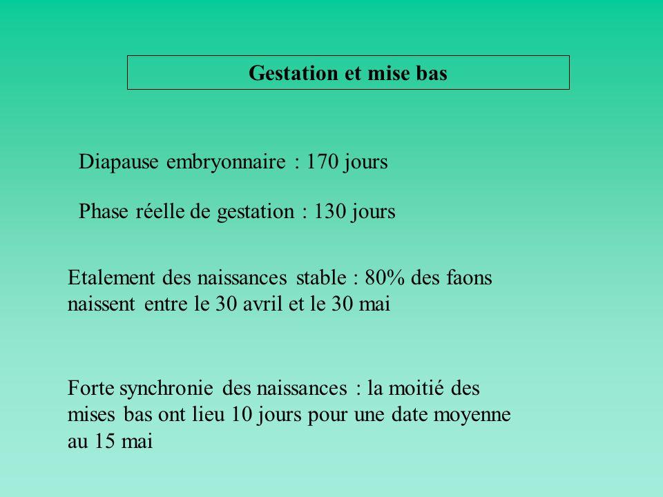 Gestation et mise bas Diapause embryonnaire : 170 jours Etalement des naissances stable : 80% des faons naissent entre le 30 avril et le 30 mai Forte