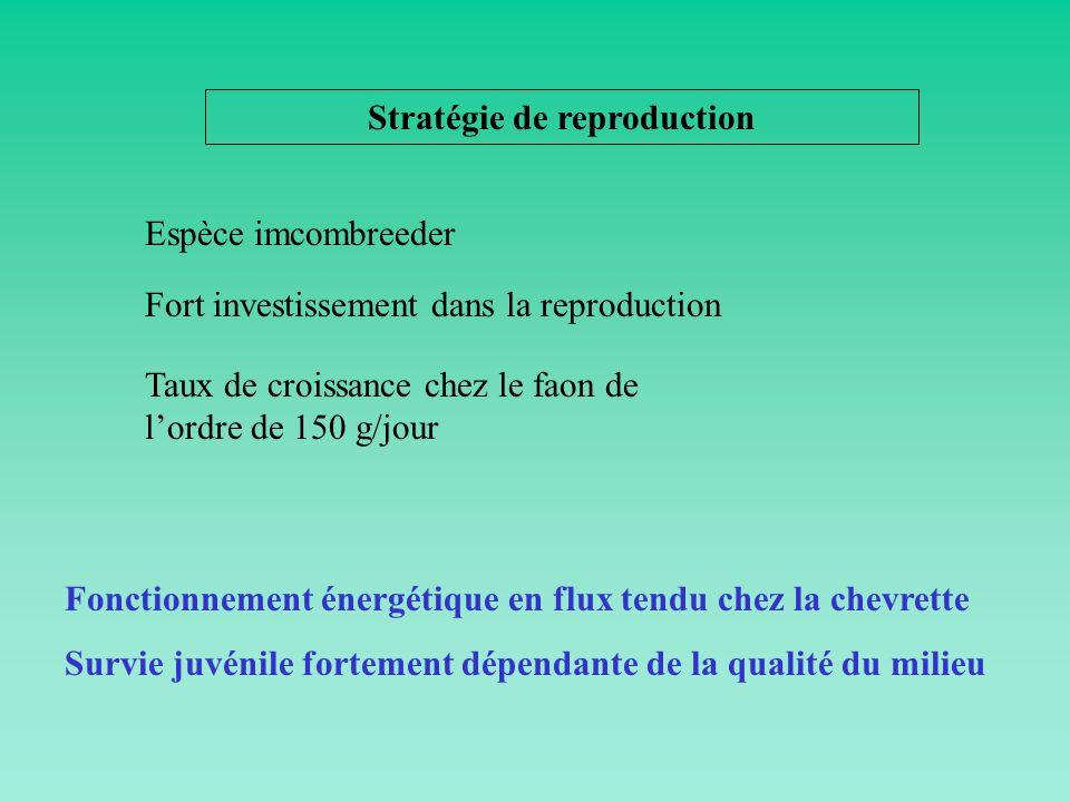 Stratégie de reproduction Fort investissement dans la reproduction Espèce imcombreeder Taux de croissance chez le faon de lordre de 150 g/jour Fonctio