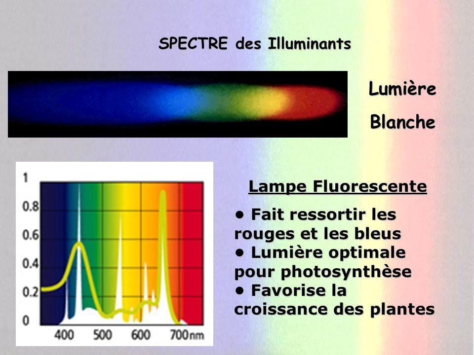 SPECTRE des Illuminants LumièreBlanche Lampe Fluorescente Fait ressortir les rouges et les bleus Lumière optimale pour photosynthèse Favorise la crois