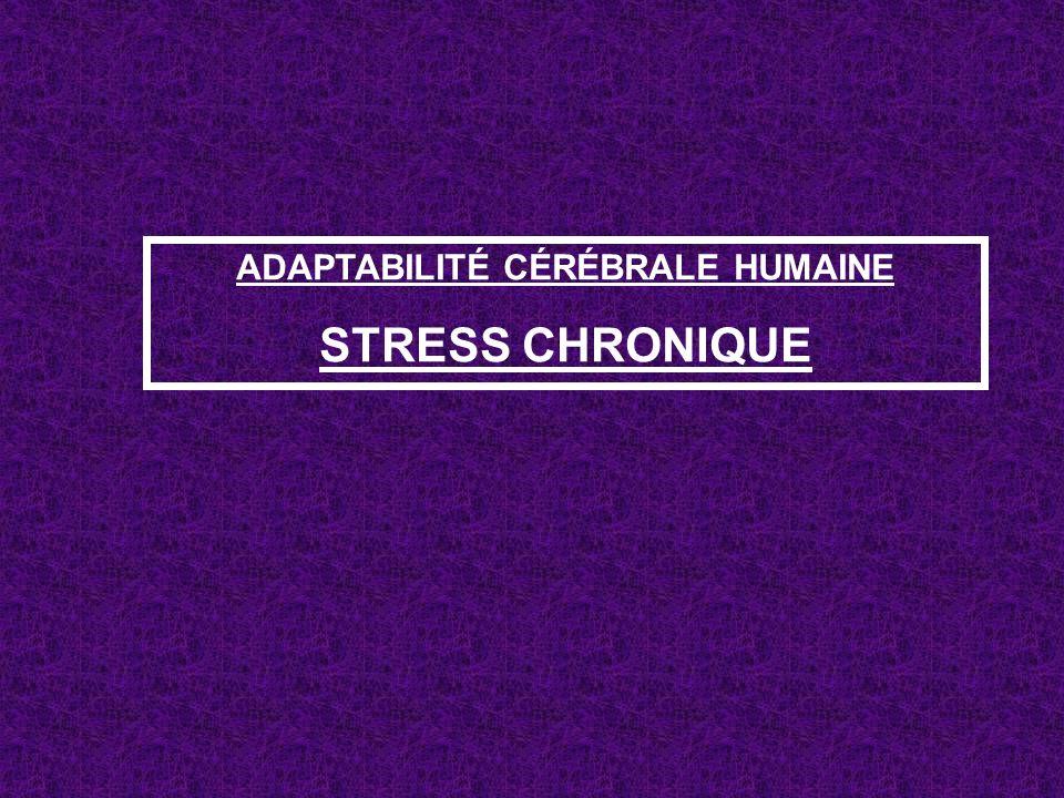ADAPTABILITÉ CÉRÉBRALE HUMAINE STRESS CHRONIQUE