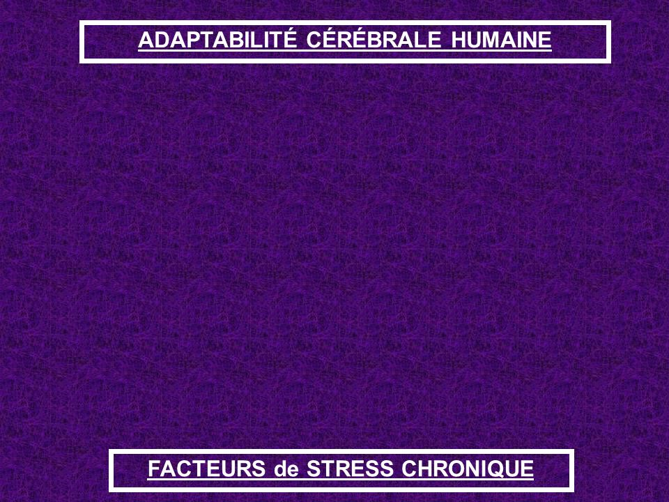 ADAPTABILITÉ CÉRÉBRALE HUMAINE ADAPTATION CEREBRALE Perception comportement Autrui Facteurs physiques Culture Environnement Personnalité Facteurs cogn