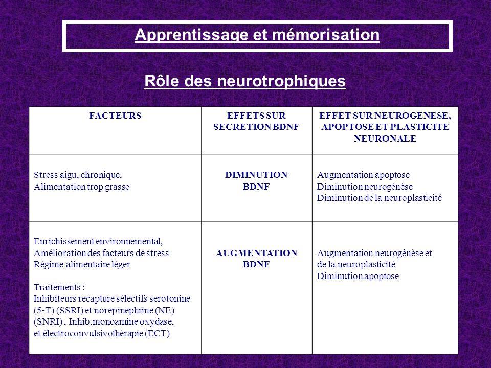 Apprentissage et mémorisation Rôle des neurotrophiques FACTEURSEFFETS SUR SECRETION BDNF EFFET SUR NEUROGENESE, APOPTOSE ET PLASTICITE NEURONALE Stres