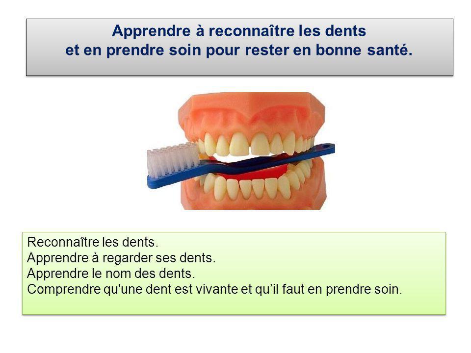 Apprendre à reconnaître les dents et en prendre soin pour rester en bonne santé. Apprendre à reconnaître les dents et en prendre soin pour rester en b