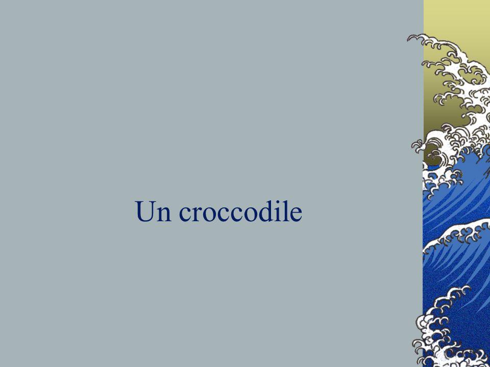 Un croccodile