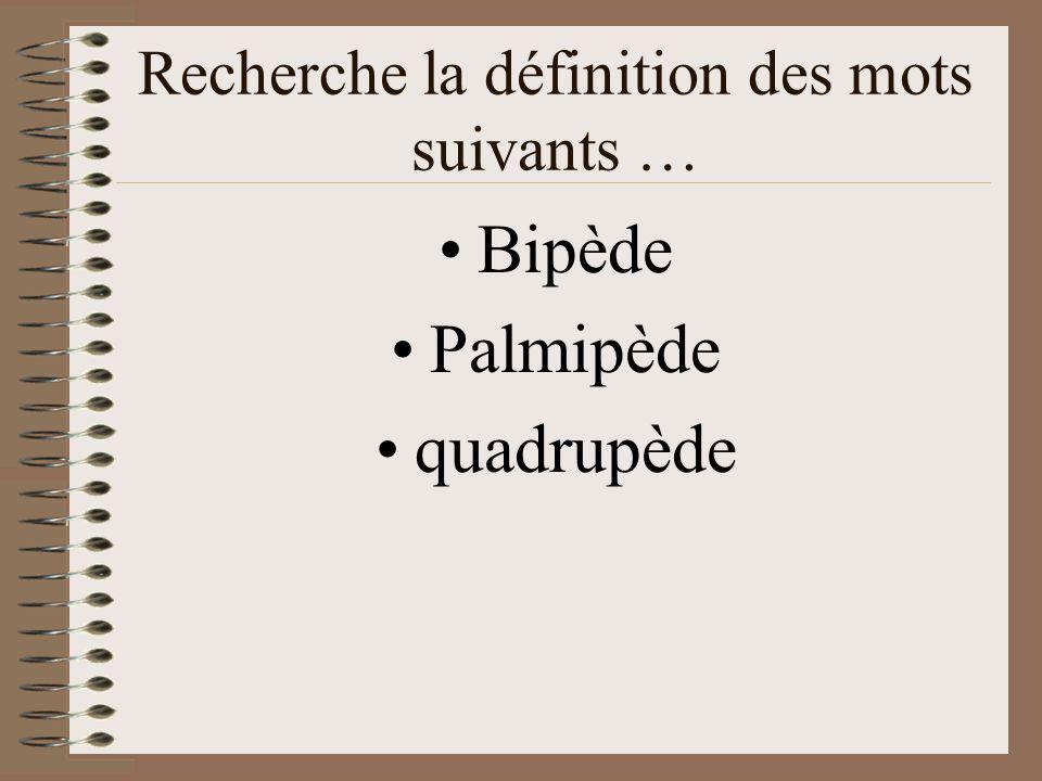 Recherche la définition des mots suivants … Bipède Palmipède quadrupède