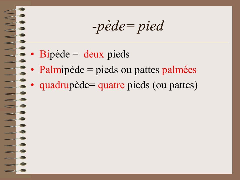 -pède= pied Bipède = deux pieds Palmipède = pieds ou pattes palmées quadrupède= quatre pieds (ou pattes)