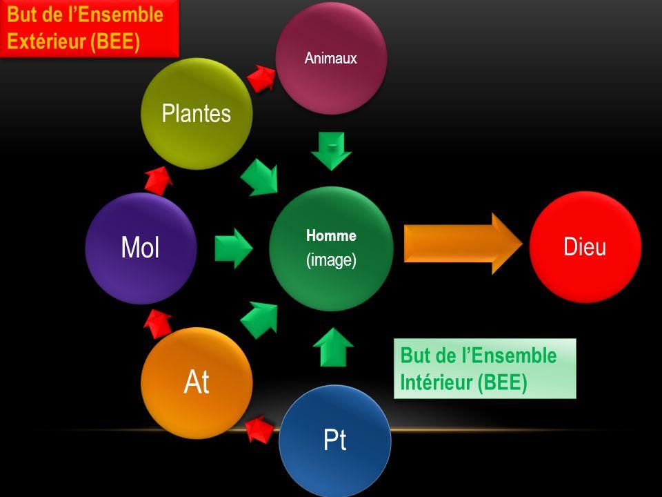 (image) Animaux Dieu Pt At Mol Plantes But de lEnsemble Extérieur (BEE) But de lEnsemble Extérieur (BEE) But de lEnsemble Intérieur (BEE)